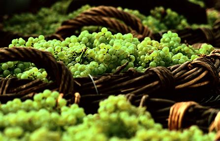 Champagne_lese_fi_1536656260.jpg