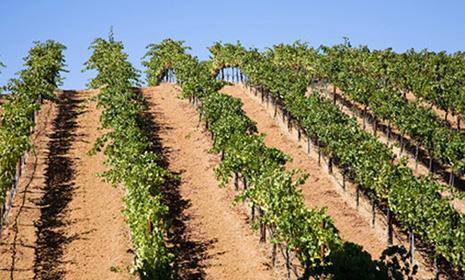 Weinland-usa-kalifornien_1509006644.fi